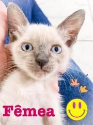 Doação de gatinhos