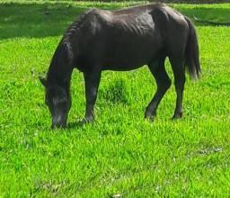 Vendo cavalos