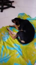 Adoção de filhote de cachorro