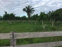 Fazenda no IATA perto de Guajará Mirim