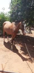Cavalo Manso , bom de charrete e cela