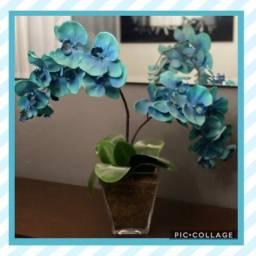 Arranjo orquídeas azuis