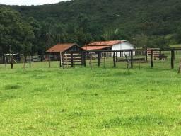 Fazenda 52 Alqueires | Região Parauna | prazos até 2 anos