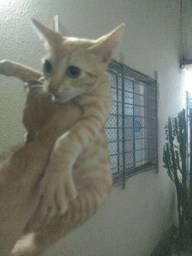 Adoção gatos