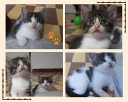 Gatos filhotes 1 mês para adoção responsável