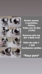 Restam 2 machinhos shihtzu