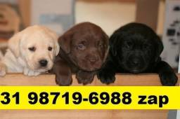 Canil Filhotes Cães BH Labrador Rottweiler Akita Pastor Boxer Golden