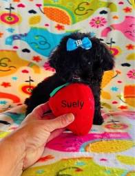 Raríssimo ! Poodle micro toy lindo