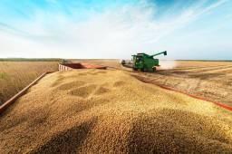 Título do anúncio: Procuro terras na região de ariguemes para plantio de soja
