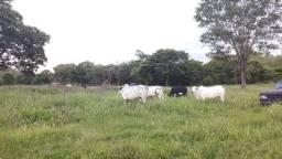 Vende fazenda 227 Hectares Paracatu