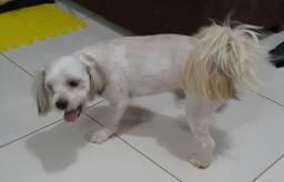 Doacao cachorros