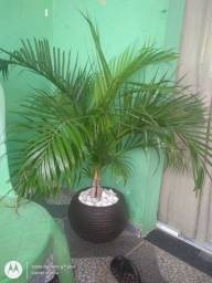 Vendo esse dois jarros com as palmeiras completo