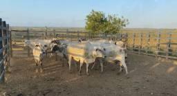 10 vacas com prenhes confirmada