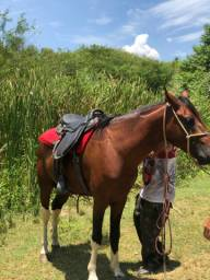 Cavalo lindo