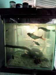 Vendo aquário completo ou troco