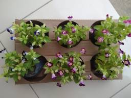 Floricultura BOM JESUS