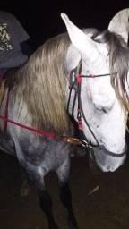 Vendo cavalo tordilho de montaria