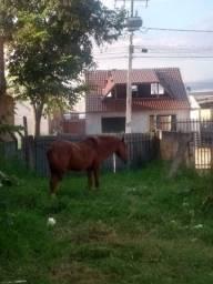 ? cavalo, bom de charrete. 1.500 reais