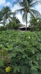 Ilha de Itaparica - Chácara à venda