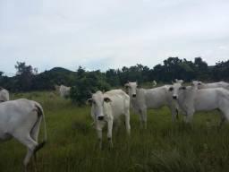 Fazenda em Paranatinga-MT, 1.199 alq, 80% aberta