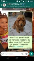 Vende-se cachorro que desapareceu cerca de 2 meses! gratifica-se!