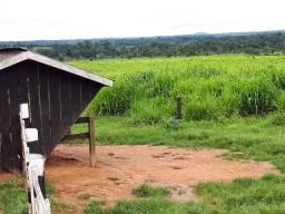 Fazenda Rondônia Machadinho