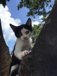 Lindos gatinhos para doação responsável!!!