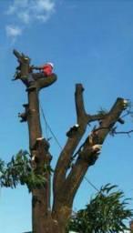 Corte e poda de árvores pequeno e grande porte