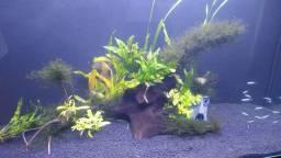 Tronco de aroeira tratado para aquário