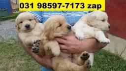 Canil Filhotes Cães Várias Raças BH Golden Boxer Labrador Pastor Akita Rottweiler