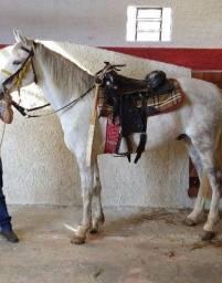 Vendo este cavalo , 4.000,00