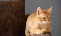 Adoção de gato filhote, castração gratuita