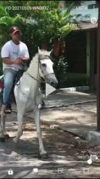 Vendo cavalo Machado picado