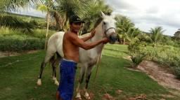 Vendo cavalo bom pra corrida