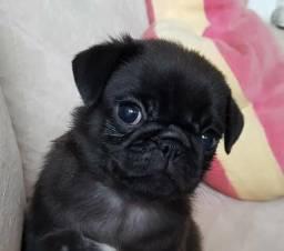 Vendo Pug