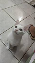 Doa-se gatinho branco.