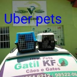 Uber pets transporte