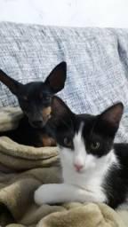 Tutora de Gatos e cachorros