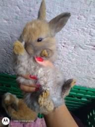 Vende-se coelhinhos