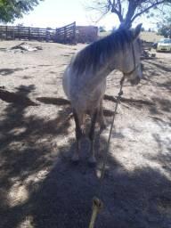Égua com polda ao pé
