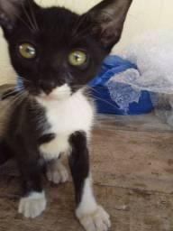 Estou doando este gato macho