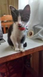 doação de gatinha linda