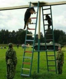 Adestramento e aluguel de cães de guarda
