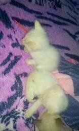 Lindos gatinhos doação