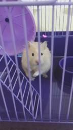 Vendo casal de hamsters completo