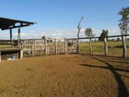 Fazenda c/ 500he c/ 315he formado, a 50km de Cuiabá-MT