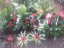Plantas e mudas de flores