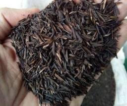 Casca de arroz carbonizado