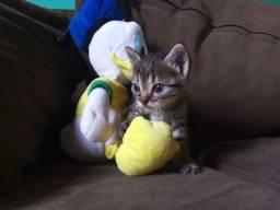 Gatos para adoção