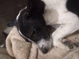 Doação doa-se doando cachorro